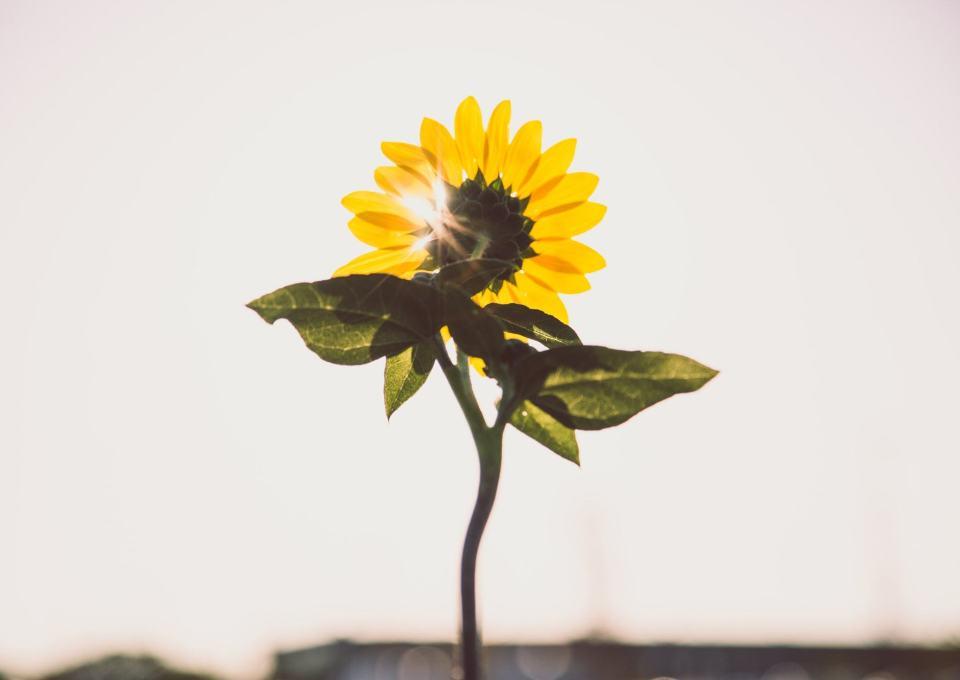 Voorkom een winterdip: 5 tips voor voldoende vitamine D!